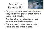 food of the kangaroo rat
