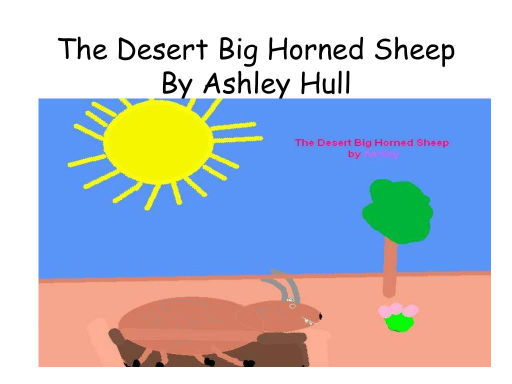 the desert big horned sheep by ashley hull l.