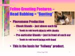 feline greeting postures head rubbing bunting