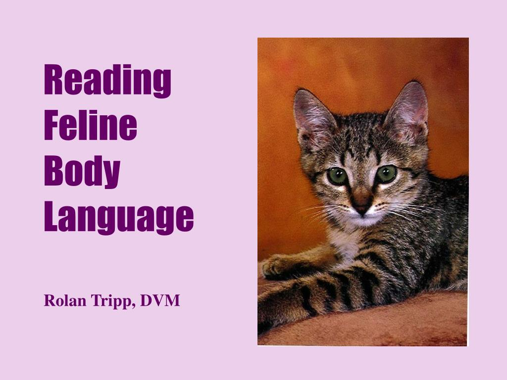 reading feline body language l.