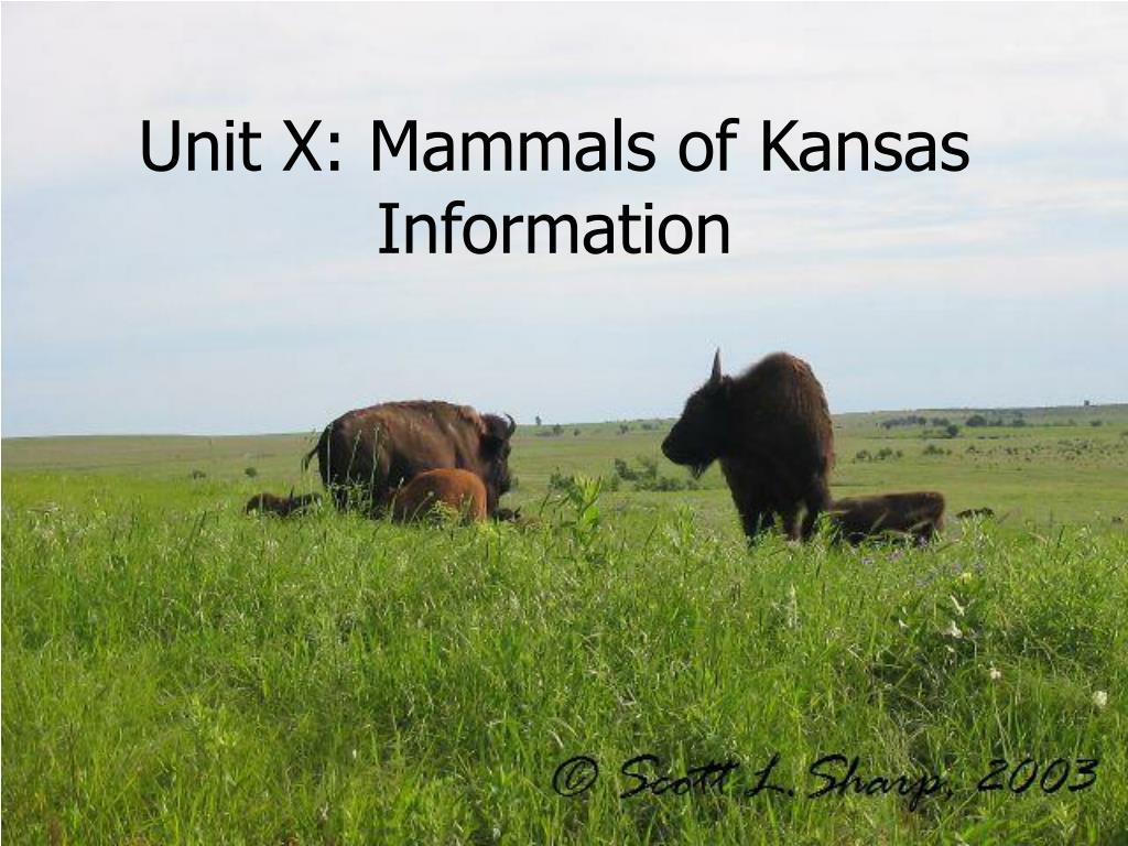 unit x mammals of kansas information l.