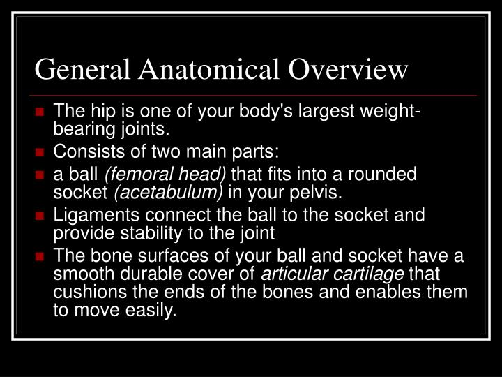 General anatomical overview
