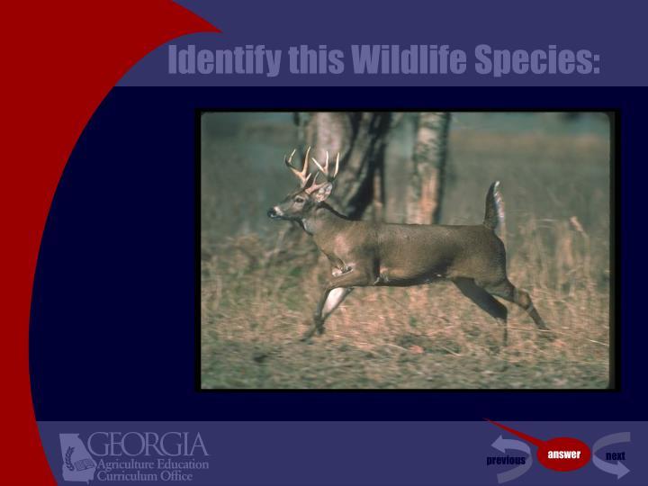 Identify this wildlife species