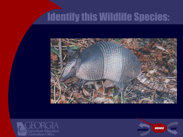 Identify this Wildlife Species: