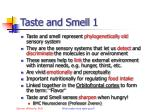 taste and smell 1