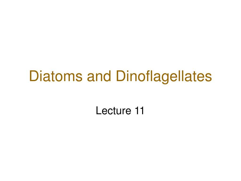 diatoms and dinoflagellates l.