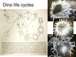 dino life cycles