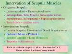 innervation of scapula muscles