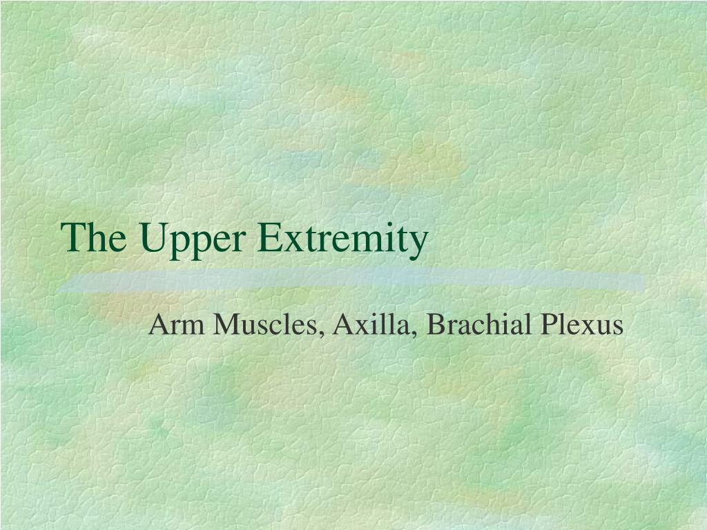 the upper extremity l.