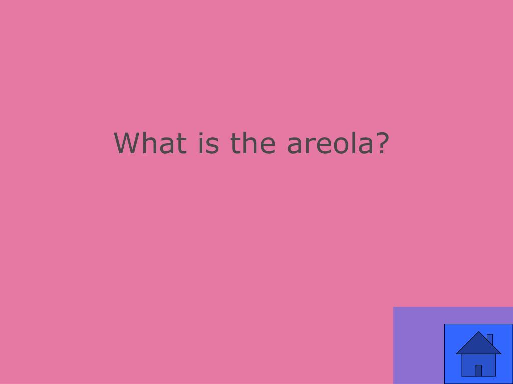 What is the areola?