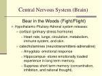 c entral nervous system brain