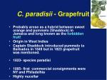 c paradisii grapefruit