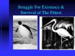 struggle for existence survival of the fittest