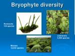 bryophyte diversity
