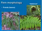 fern morphology31