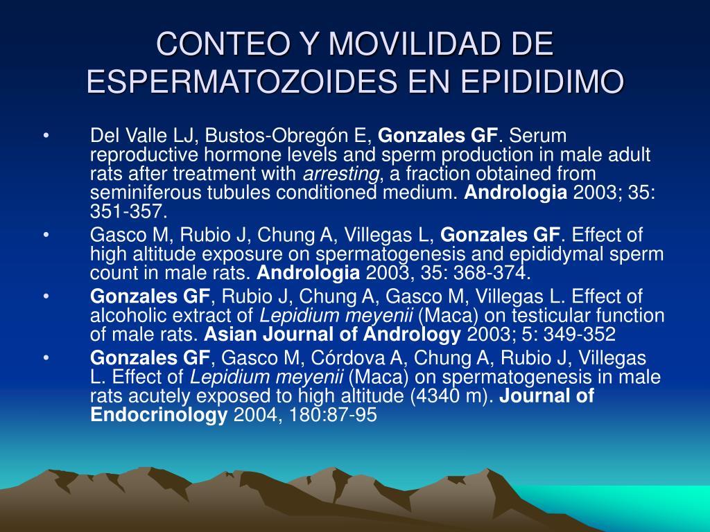 CONTEO Y MOVILIDAD DE ESPERMATOZOIDES EN EPIDIDIMO