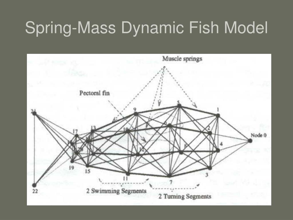 Spring-Mass Dynamic Fish Model