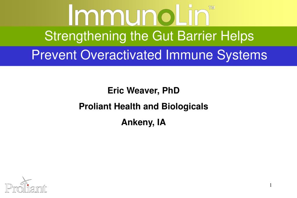 strengthening the gut barrier helps prevent overactivated immune systems l.