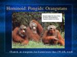 hominoid pongids orangutans