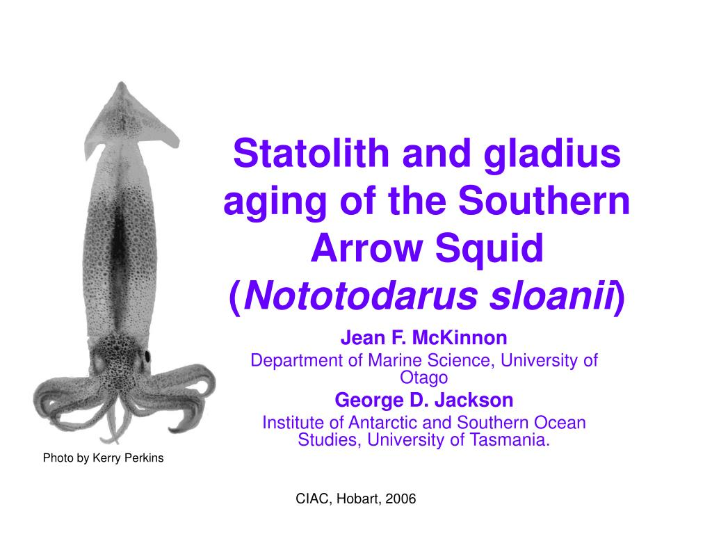 statolith and gladius aging of the southern arrow squid nototodarus sloanii l.