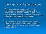 diencephalon hypothalamus