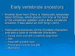 early vertebrate ancestors52