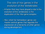 the role of hox genes in the evolution of the vertebrates