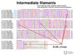 intermediate filaments34