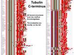 tubulin c terminus