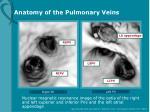 anatomy of the pulmonary veins