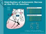 distribution of autonomic nerves at the pv la junction