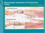 microscopic anatomy of pulmonary veins
