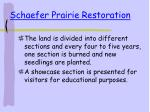 schaefer prairie restoration