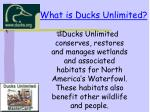 what is ducks unlimited