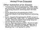 animal prion diseases10
