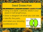 seed dissection