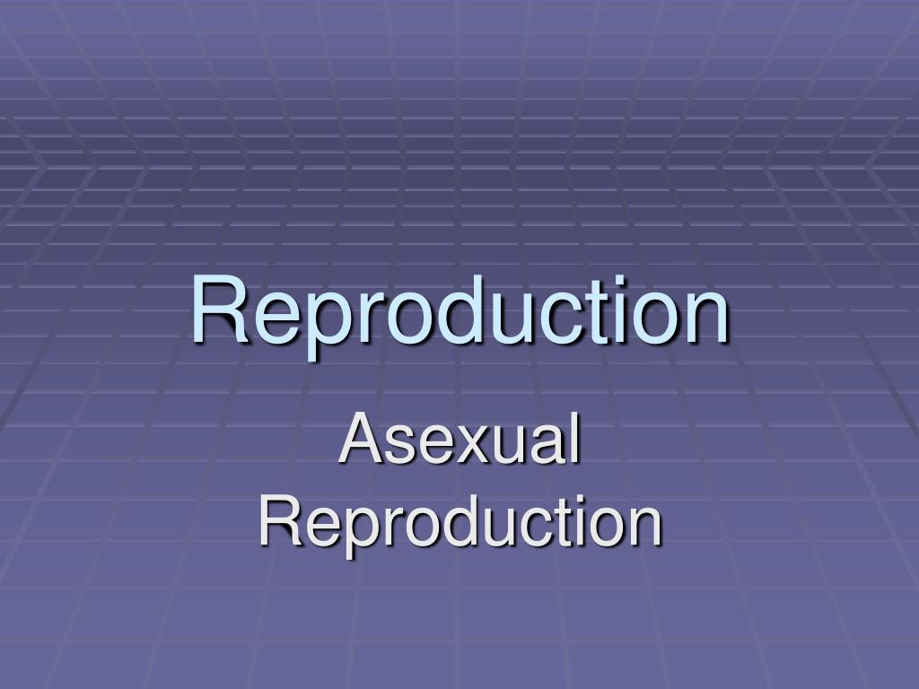 reproduction l.