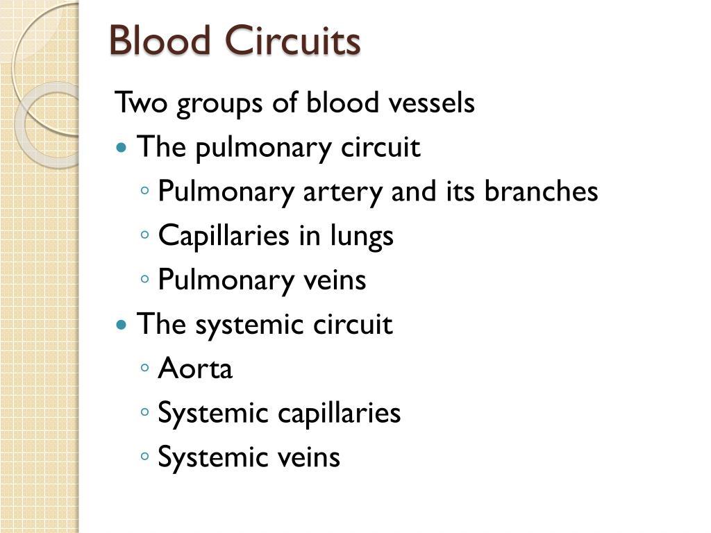 Blood Circuits