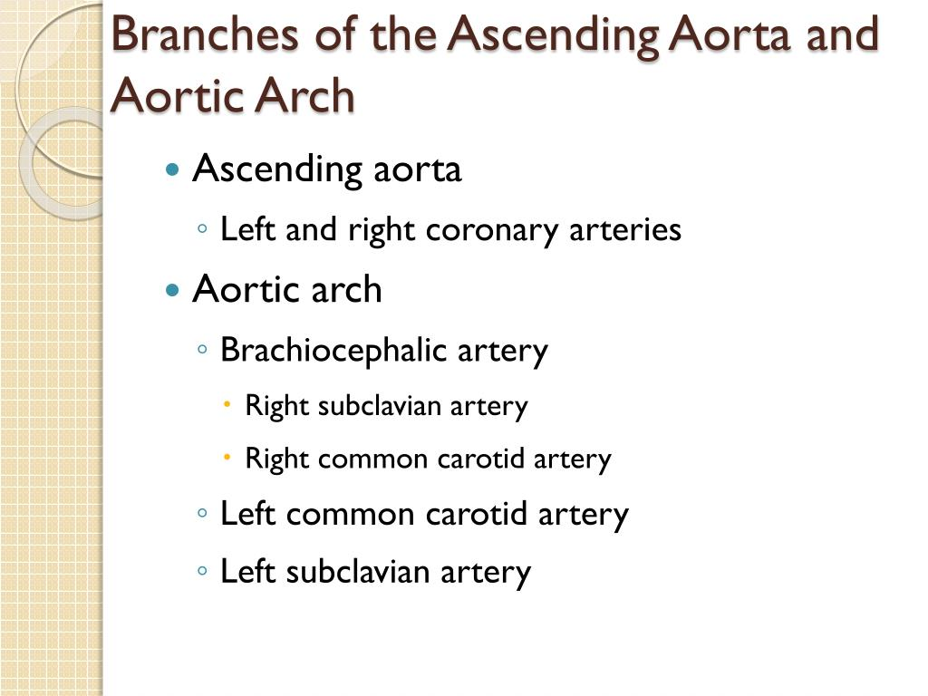Branches of the Ascending Aorta and Aortic Arch
