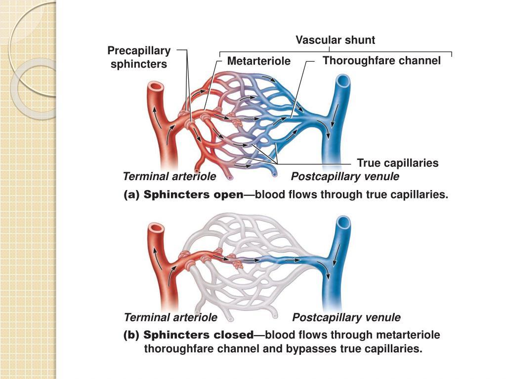Vascular shunt