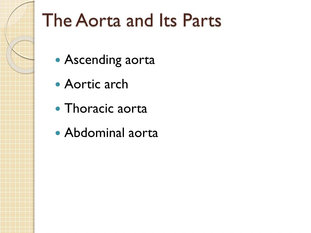 The Aorta and Its Parts