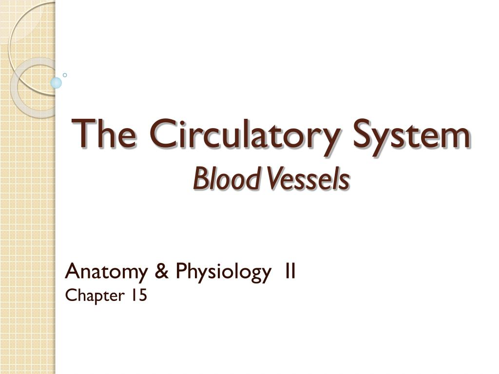 the circulatory system blood vessels l.