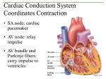 cardiac conduction system coordinates contraction
