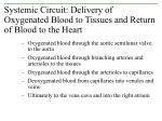 systemic circuit delivery of oxygenated blood to tissues and return of blood to the heart