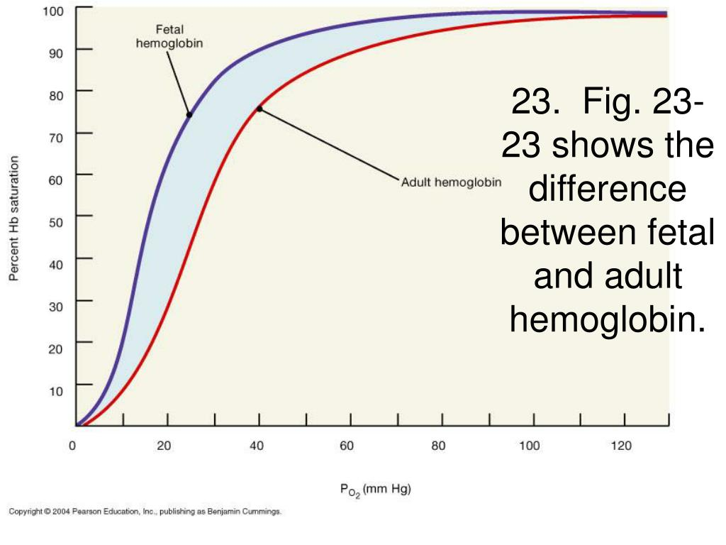 23.  Fig. 23-23 shows the difference between fetal and adult hemoglobin.