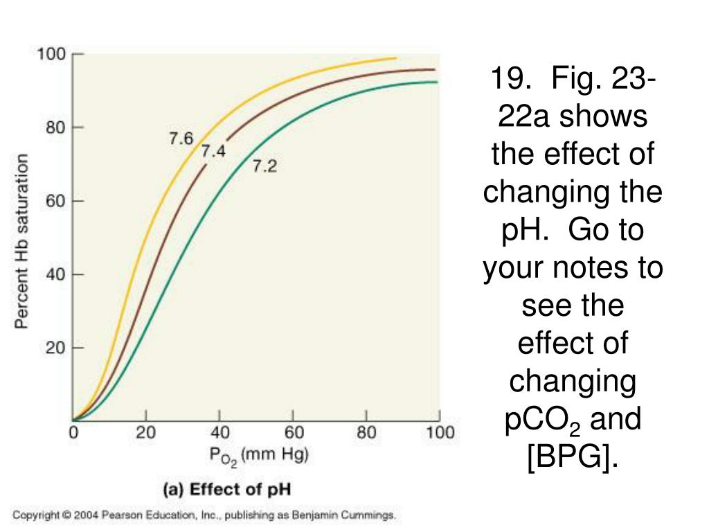 19.  Fig. 23-22a shows the effect of changing the pH.  Go to your notes to see the effect of changing pCO