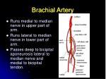 brachial artery21