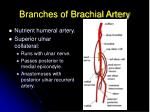 branches of brachial artery19