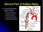 second part of axillary artery