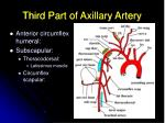 third part of axillary artery15